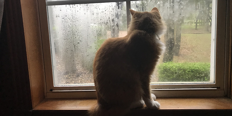A cat on a windowsill watching the rain.