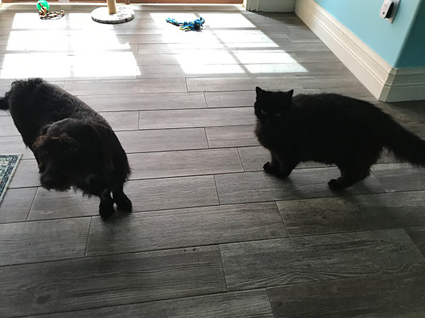 Black dog and black cat together.