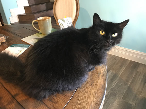 Black fluffy cat on the table