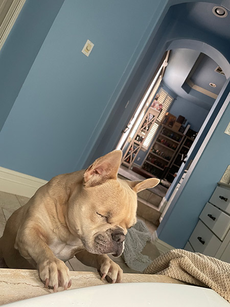 One eyed French bulldog having doubts about safety of the bath